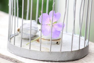 Caged flower by Itrieditathome