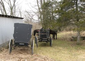 Amish Buggy Parking Only by Lectrichead