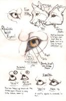 Wolf eye anatomy page by Anarchpeace