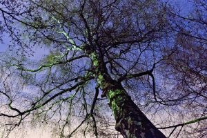 Tree's and stars by pmessinger