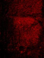 Hellish Grunge II by emothic-stock