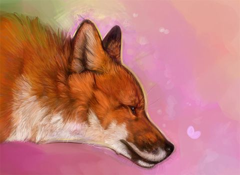 Fox Profile by daisy7