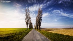 One road the Danube by NorbertKocsis