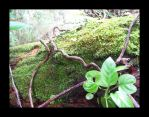 mossy log by mylivingphotography
