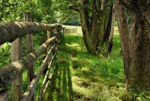 behind the fence by Wilithin