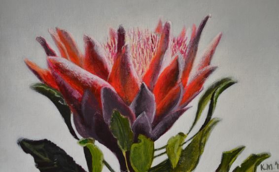 King Protea by DummyForce