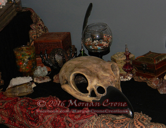 Giant Corvid Skull 3 by MorganCrone