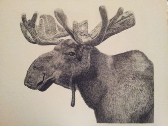 Moose by LinksLover4ever