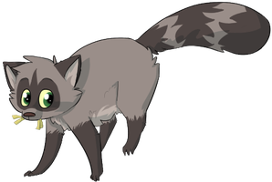 Raccoon The Theif by Chiiboo