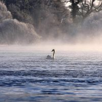 Swan on the Bann II by younghappy