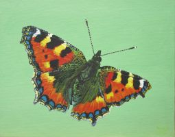 Small Tortoiseshell Butterfly by eastcorkpainter