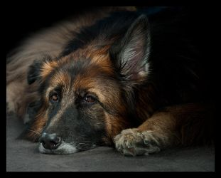 It's A Dog's Life by Skia