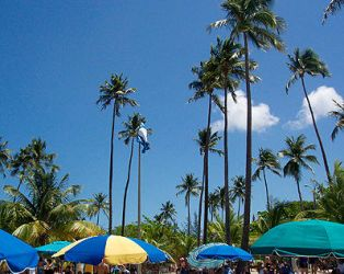 Palm trees in Luquillo. by vasoline