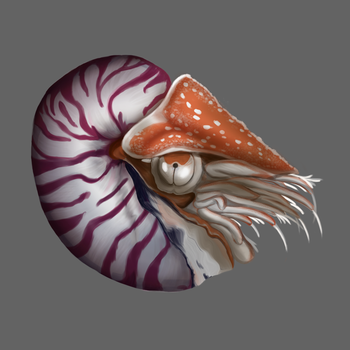 Nautilus by justthebutts