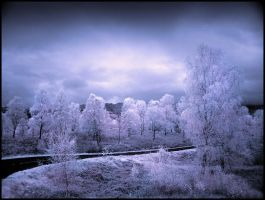 Trossachs Birch Trees Infrared by MichiLauke