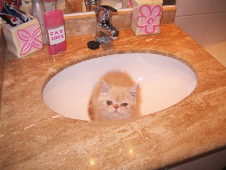 Baby Cat Washbasin time by akemichuu
