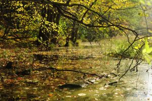 early autumn swamp by Wilithin