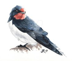 Barn swallow. by JacobKihlgren