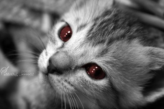 Evil Eyes... by BaNoOoTTaA
