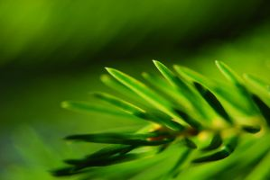 green by ovidescovici