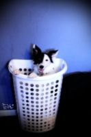 Nissa In A Hamper 1 by SpAzZnaticShuRIken