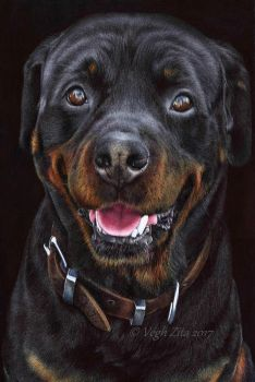 Rottweiler ballpoint pen drawing by 22Zitty22
