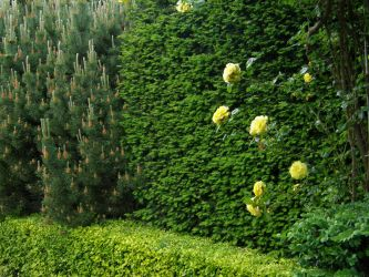 Arboretum - Green Wall by Gwathiell