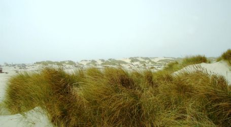 Sand Dunes 3 by LionHearted1956