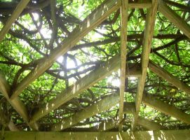 Lines + Vines + Light by evilpokejuggalette