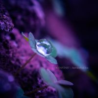 A Dollop of Water by SamanthaElisa
