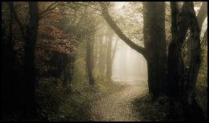 Forest path ... by MOSREDNA