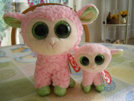 TY Beanie Boos Lambs- Babs (5in + Basket Beanie) by ShadoweonCollections