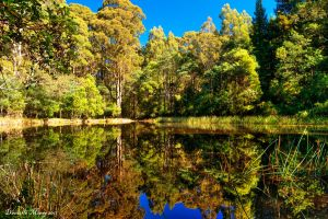 Sanatorium Lake Mt Macedon by daniellepowell82