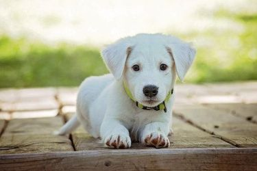Puppers Puppy! by Dog-Lovers--Club