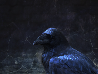 Blue raven by Madine35