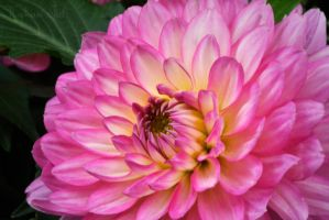 Yellow in the Pink by WorldsInWorld