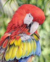 Macaw by Kot-Filemon