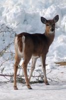 Oh deer 2 by LucieG-Stock