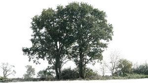 tree 12 png by gd08