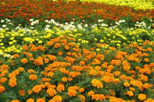 Bed of flowers by parka