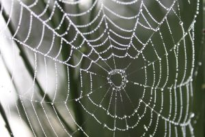 Spiders do in Morning Dew 10 by BlueDragonRose