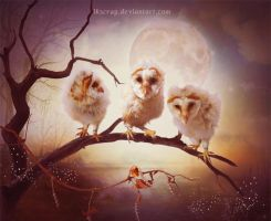 Three little owls by SoulcolorsArt