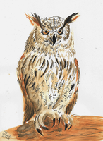 First Owl painting by SulaimanDoodle