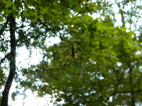 Banana Spider by Outofthisworld