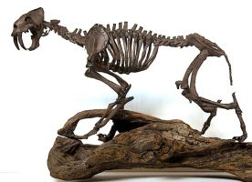 smilodon f1 by hannay1982