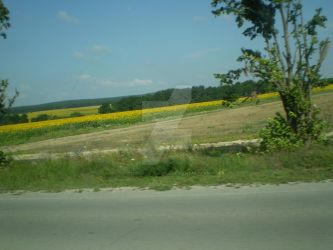 Sunflowers in Bulgaria by Hedgehog-Russell