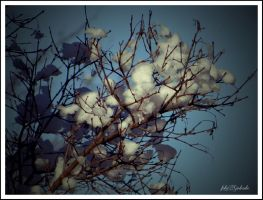Winter...12 by gintautegitte69