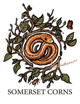 Somerset Corns by Fragile-yet-CunNINg