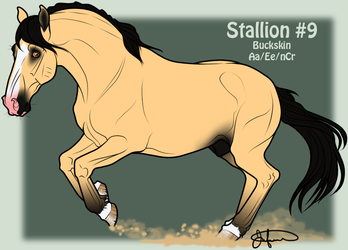 Mustang Stallion Adoption 9 by JNFerrigno