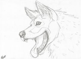 Wolf Hund by SqueekyClean-801